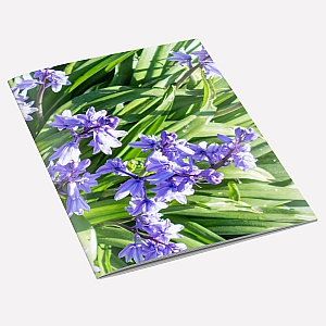 view Bluebells Notebook A6 details