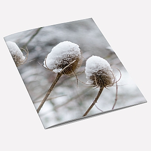 Snow Teasel A6 Notebook