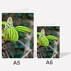 Tree Buds A6 Notebook